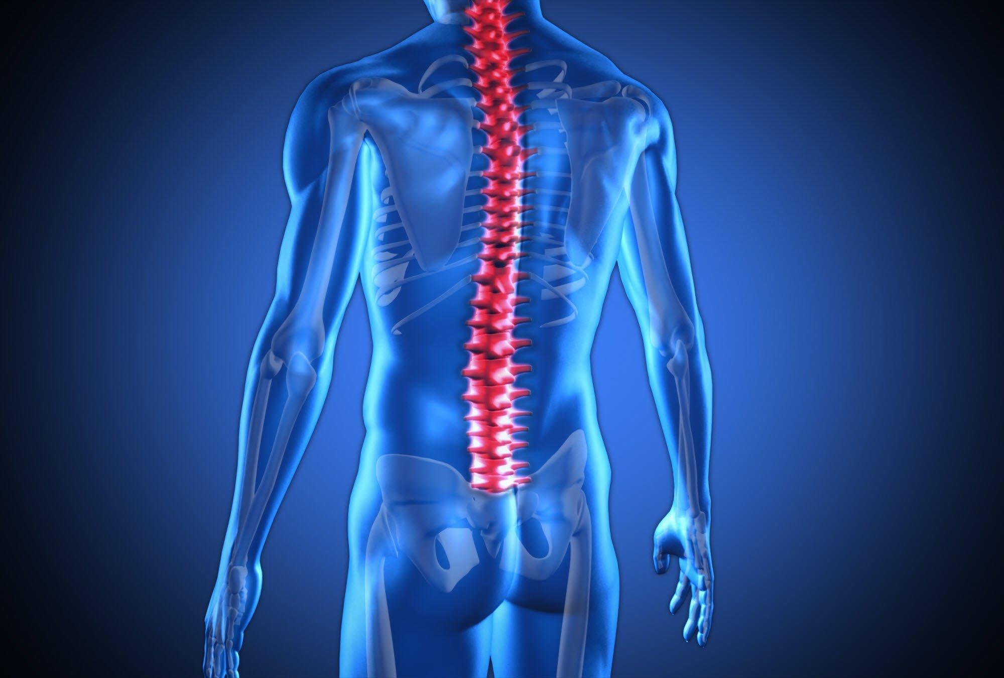 Chiropractor Spine